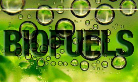 Le marché mondial des biocarburants devrait stimuler en
